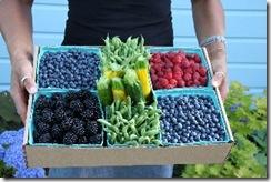 donna's produce